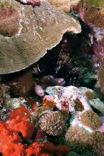 Muræner – hemmelighedsfulde ål