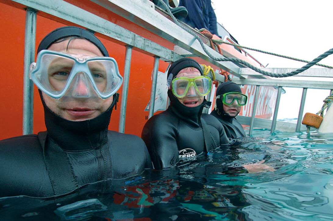 Shark Route – hajdykning i Sydafrika