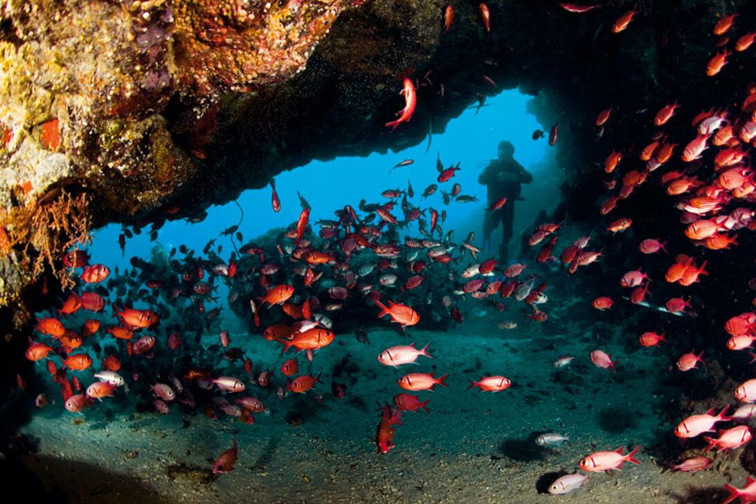 Kap Verde – fisk i spandevis