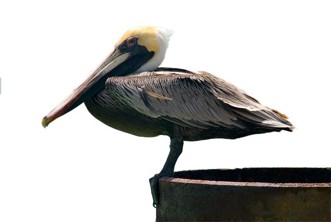 Dyk med Cousteau – Guadeloupe er et lille stykke Frankrig i Caribien
