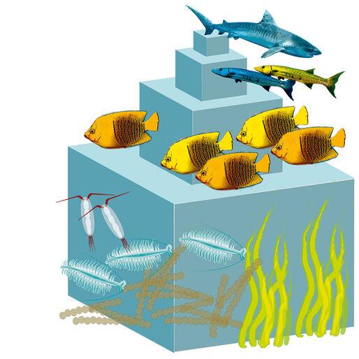 Naturklumme – trofiske niveauer