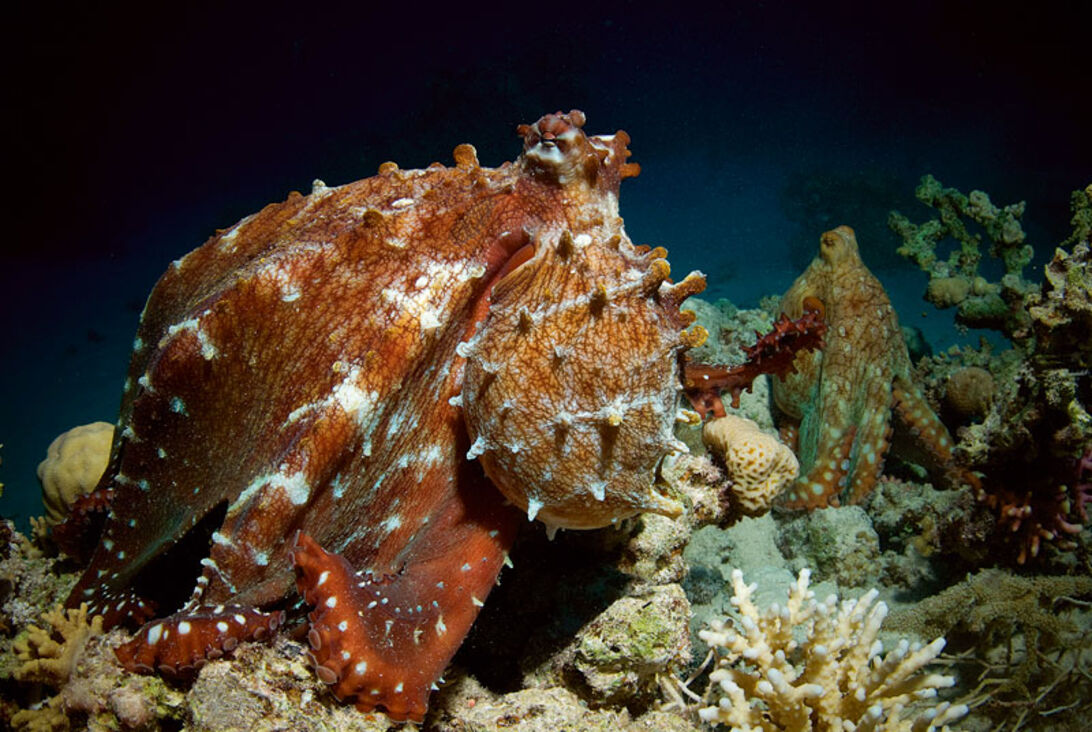 John Bantin – dykkeverdens største globetrotter