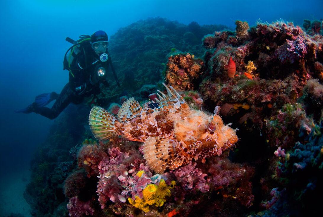 Rab & Krk – dykning i Kroatien