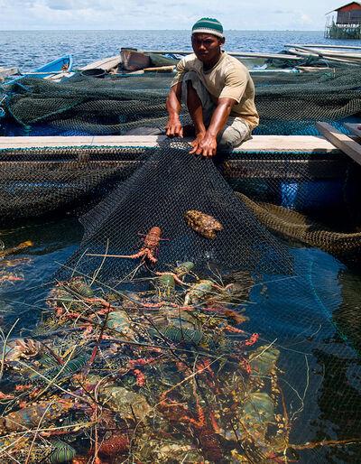 WWF-klumme – når hummeren er rød før den bliver kogt