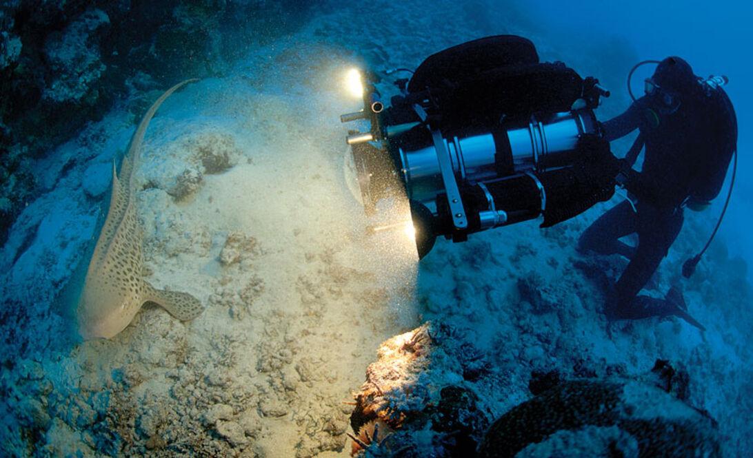 Great Barrier Reef – sjældne glimt fra en døende verden