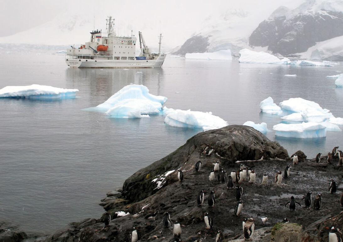 Det hvide kontinent – Antarktis' mageløse verden