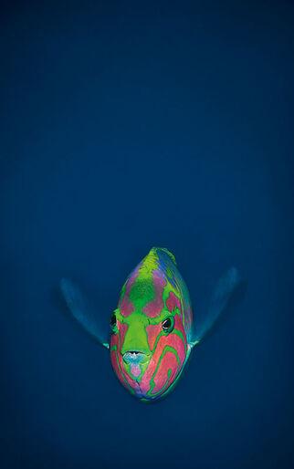 Jens Svendsen – stadig ikke mæt efter 10.000 dyk