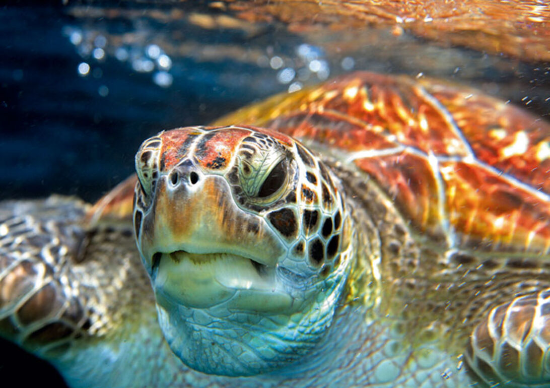 Vakre vande – guide til Thailands bedste dyk