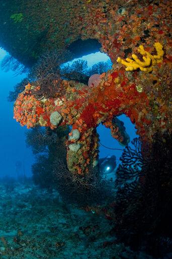 Fra A til B – dykning i sydlige Caribien