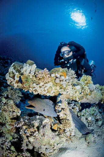 Sentinel rebreather – kan tekniske fejl elimineres?