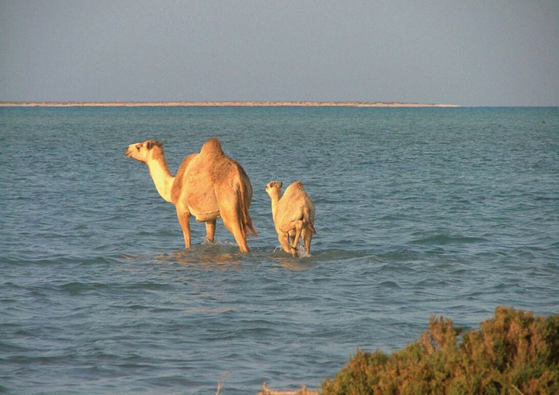 Quseir – CDWS præsenterer: Rødehavet fra nord til syd