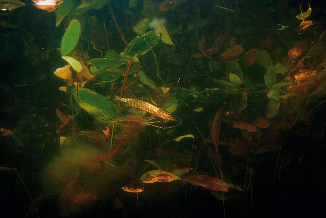 Hvad er der i søen – guide til dit lokale vandhul