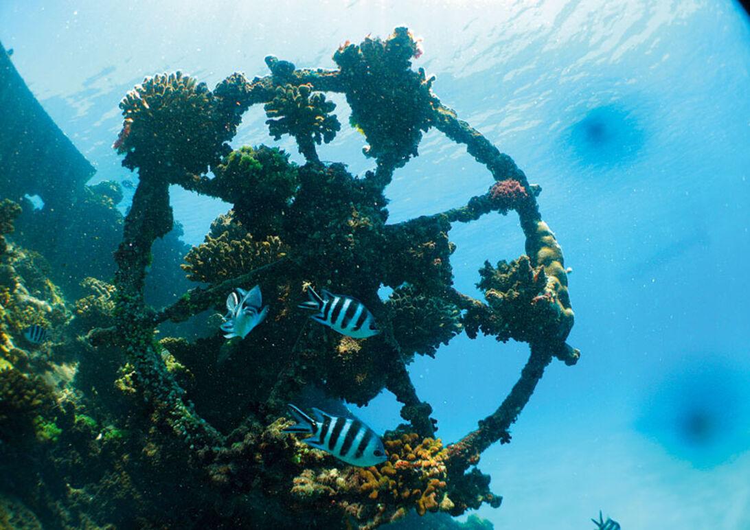 Fund på Fundu – dykning på Pemba