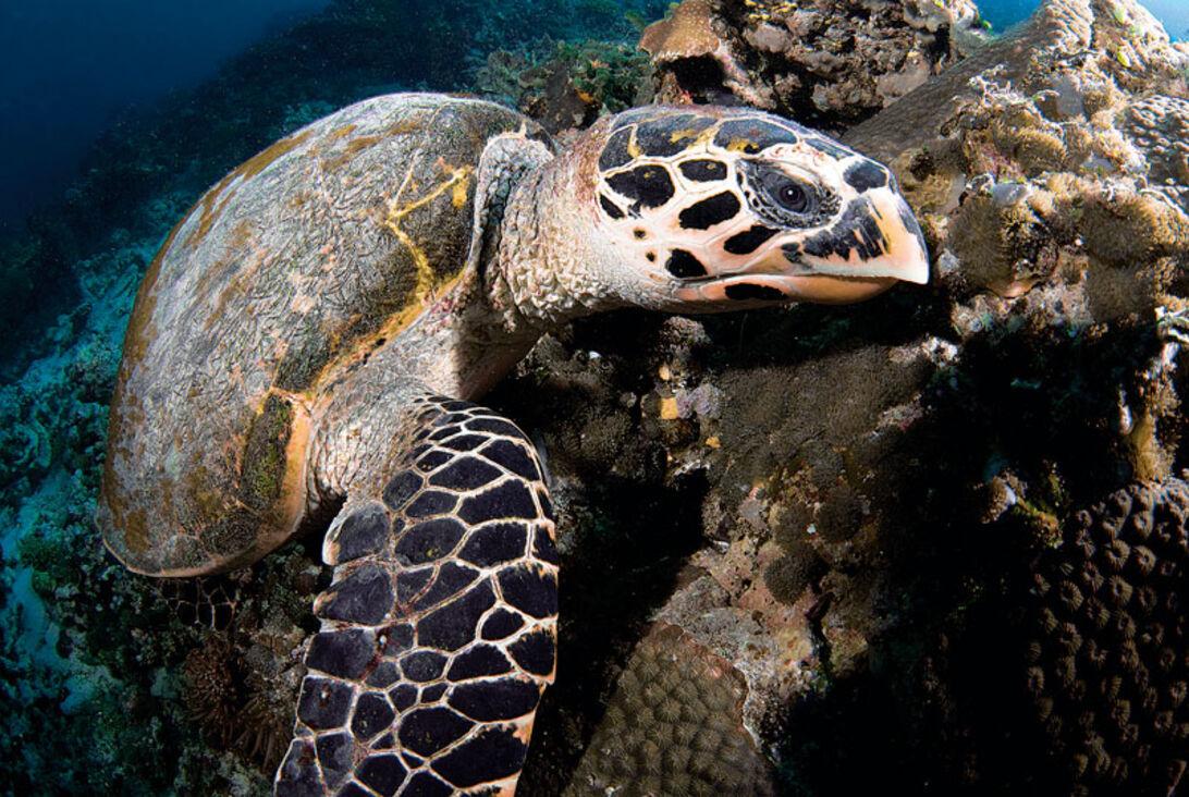 Dykning i flødeskum - luksus på maldiverne