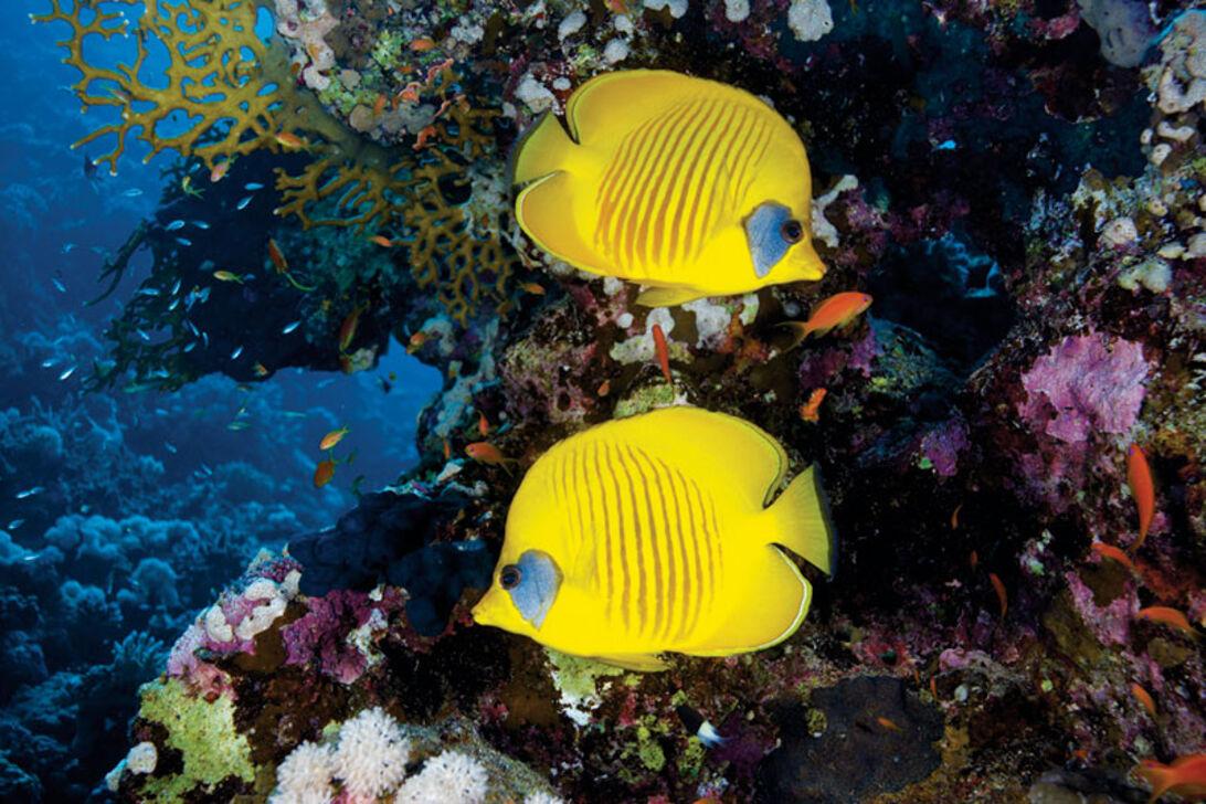 Seks dage i ørknen – dyk i det sydlige Ægypten