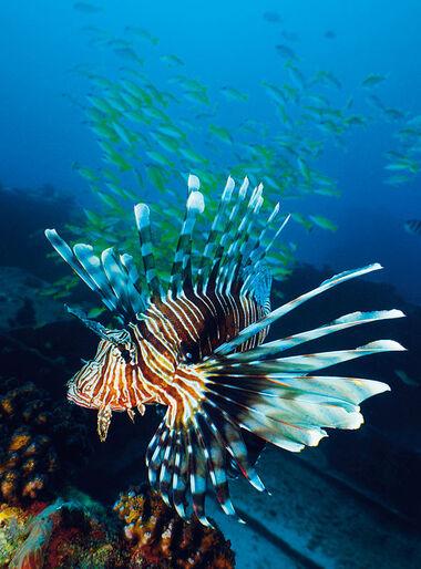 Koh Lanta – fred og ro i Andamanerhavet