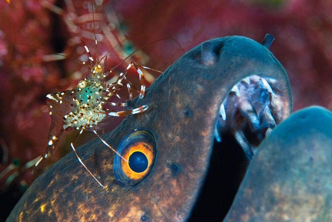 Videoskolen del 3 – lav din egen undervandsfilm