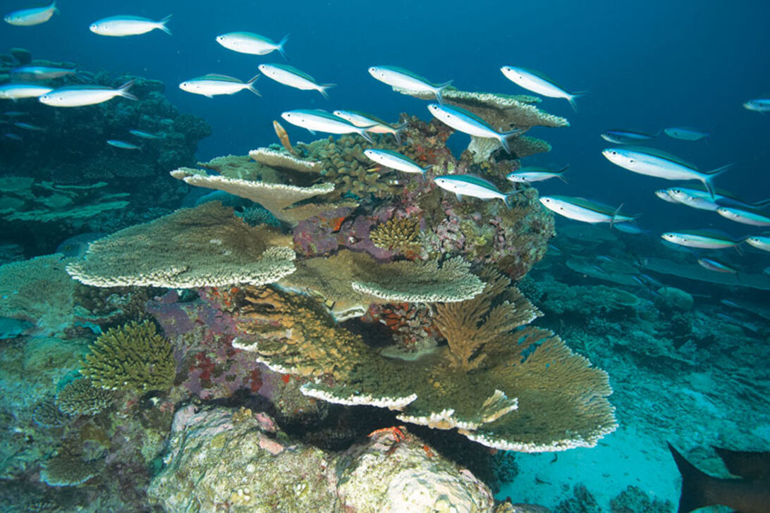 Maldiverne i syd – North Huvadhoo-atollen