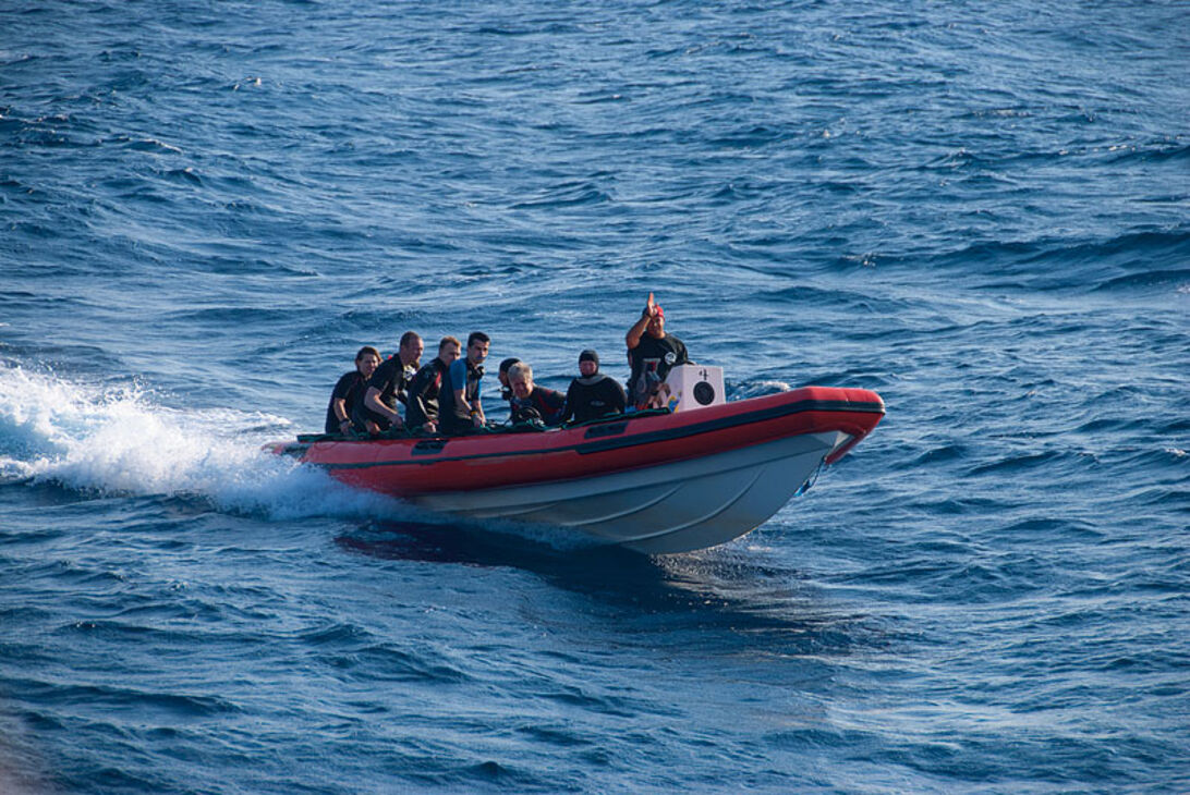 Hajsafari – Tæt på hajer i Rødehavet