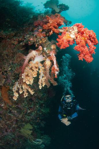 Malapascua – Filippinernes perle