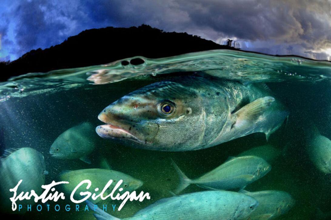 Justin Gilligan – Fotograferende forsker