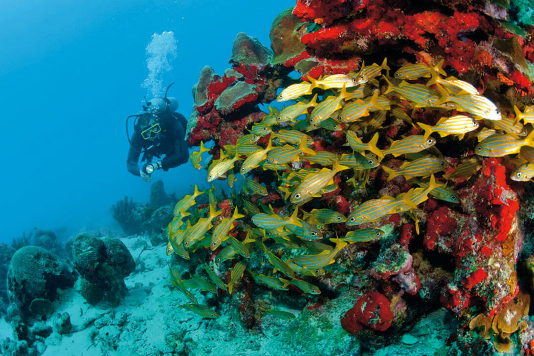 ABC-øerne – Aruba, Bonaire og Curaçao