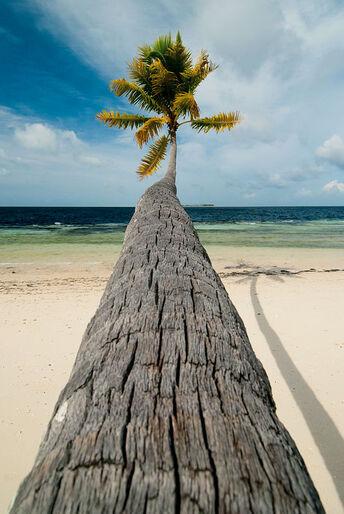 Malaysia – hvor regnskov og koralrev mødes