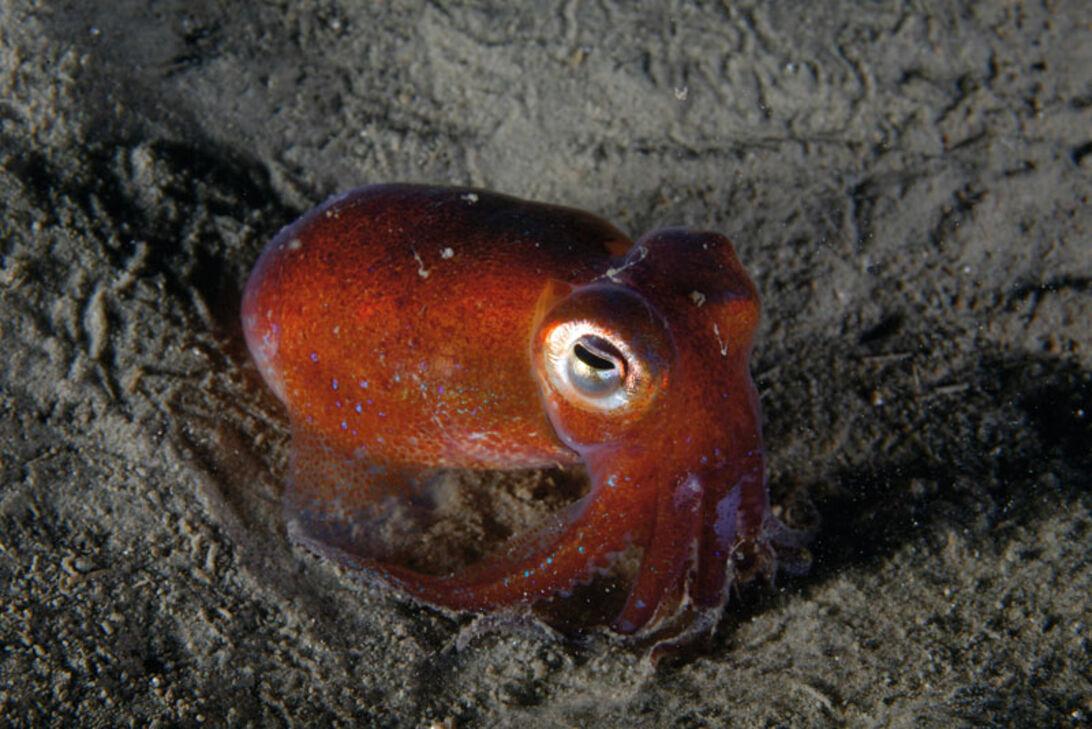 Vintervande - dykning i den kølige årstid