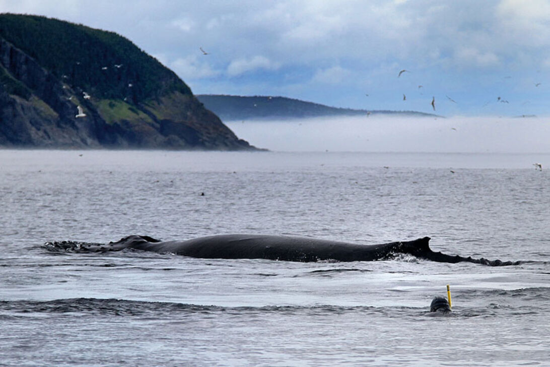 Newfoundland - Atlantiske eventyr