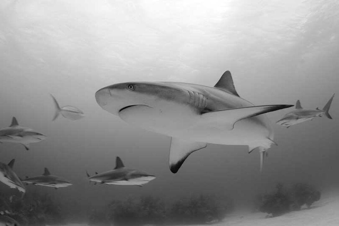 Jennie Soriano - Passion for hajer