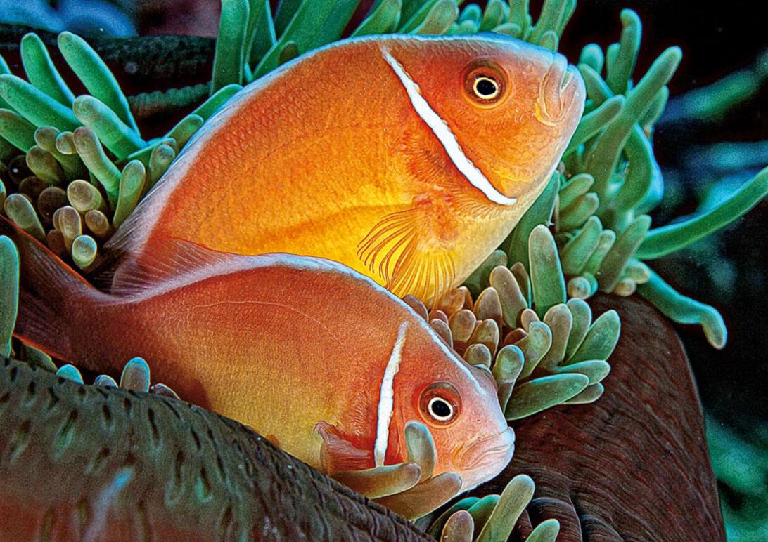 Papua Ny Guinea – På opdagelse i dykningens mekka