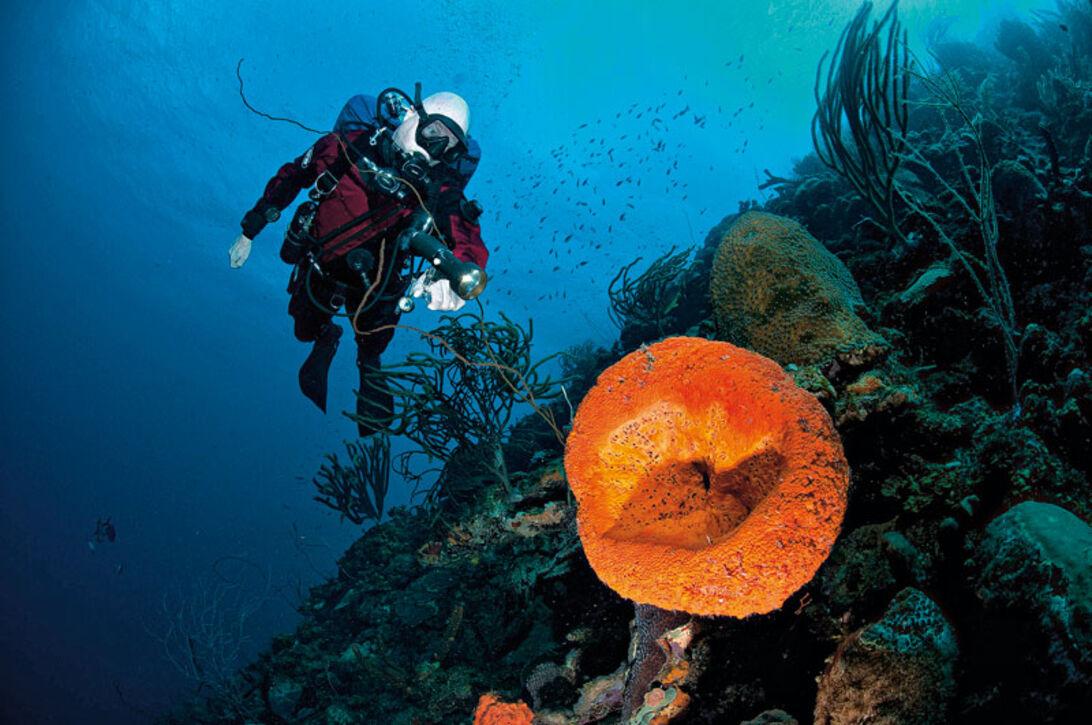 Bonaire – Total dykkefrihed