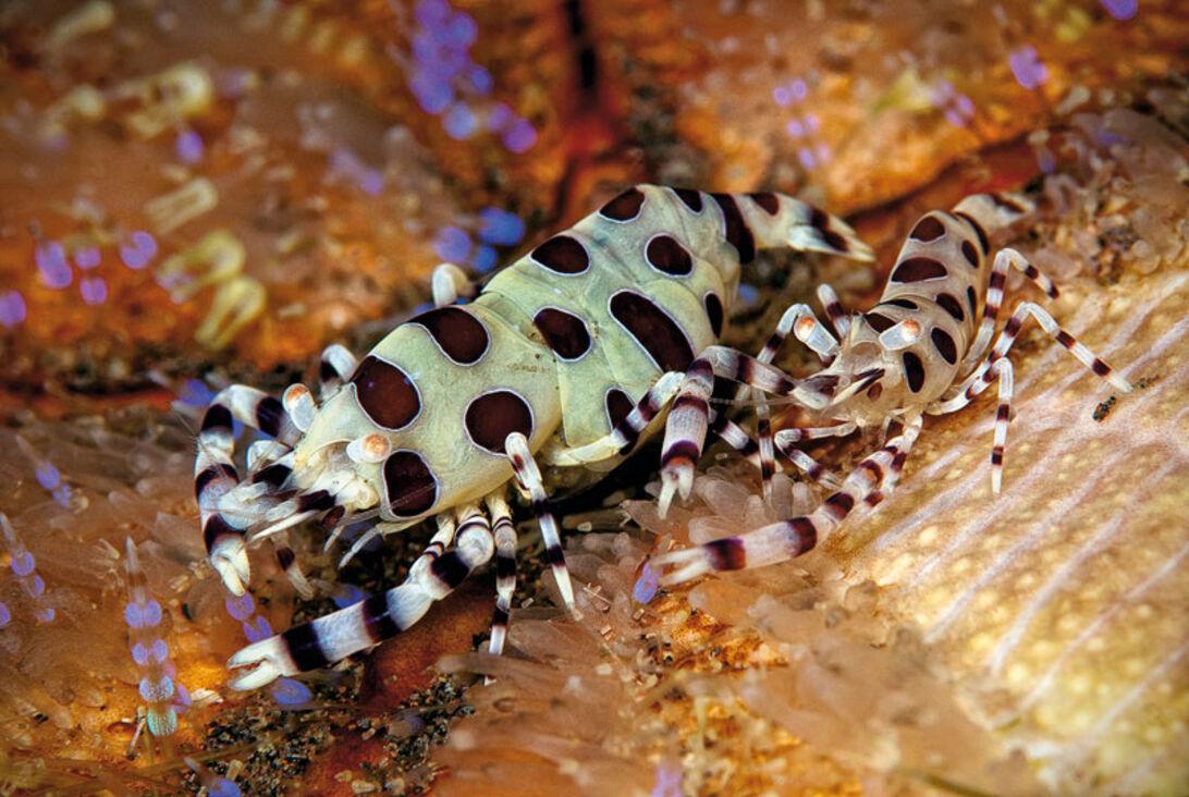Indonesiens Top fem – verdens bedste dykning?