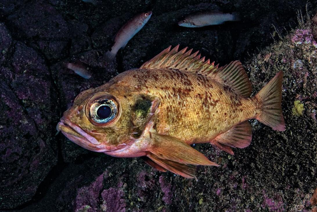 Fisk på tallerknen – hvad må vi spise?