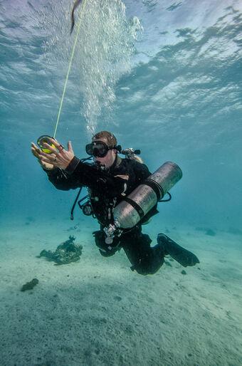 Kan en gammel hund lære nye tricks? – tek-kursus i Rødehavet