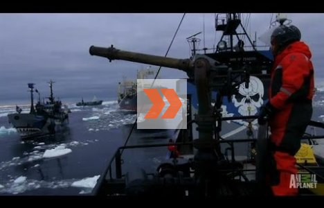Ships Collide in Final Confrontation | Whale Wars