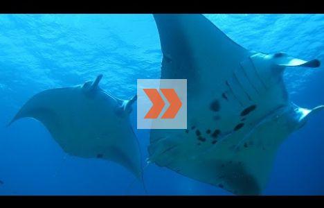 Scuba Diving – Ishigaki Island