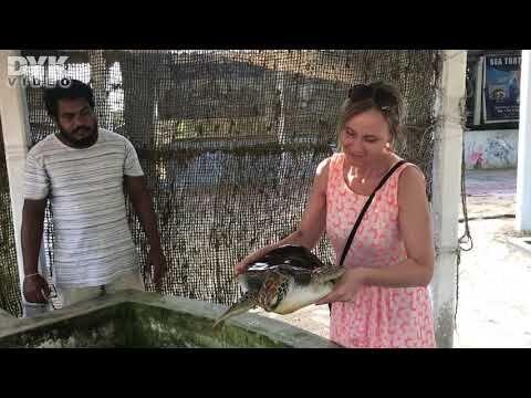 Havskildpadder omkring dykkercenteret, nyklækkede unger og besøg på Sea Turtle Hatchery.