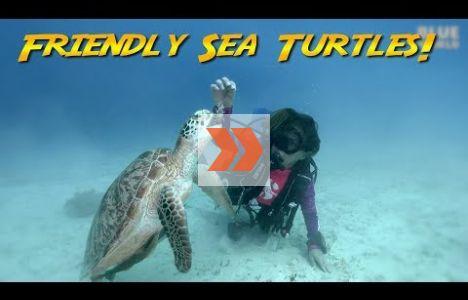 Vänliga, betande soppsköldpaddor. Video: Jonathan Bird's Blue World TV
