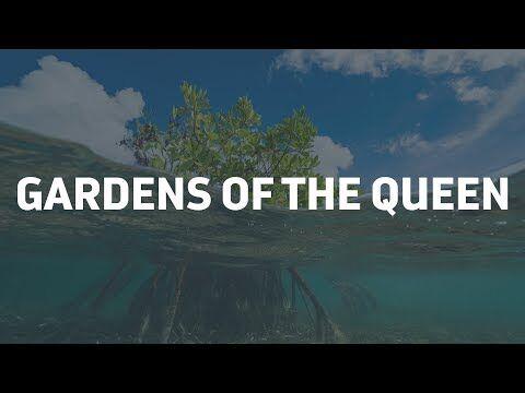 Cuba's Gardens of the Queen, (Jardines De La Reina), is often called the crown jewel of the Caribbean. This is one of the health