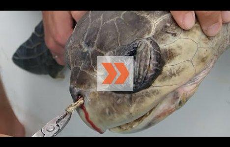 Plastik er havets fjende