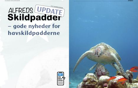 Alfreds skildpadder – update
