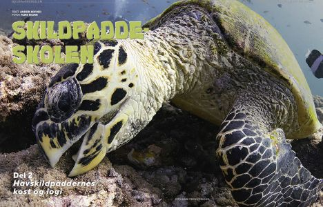 Skildpaddeskolen, del 2: Havskildpaddernes kost og logi