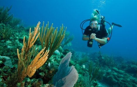 Kvindelig dykker over koralrev