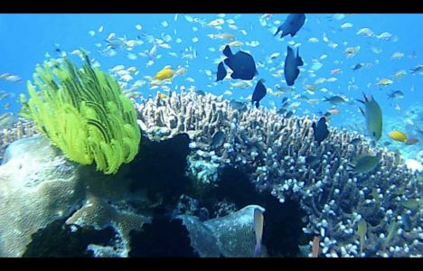 Birgir Freyr: Dyk ved Komodo islands i Indonesien.