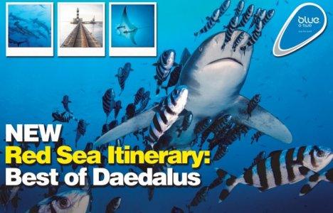 Ny blue o two rute i Rødehavet: Best of Daedalus