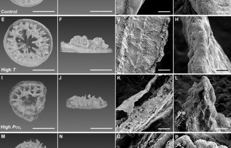 Røntgen af 1 måned gamle koralskeletter ved forskellige forhold