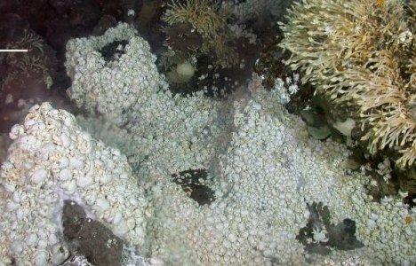 Hoff-krabber omkring et kildevæld
