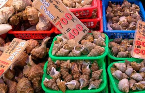 Skaldyr på japansk fiskemarked