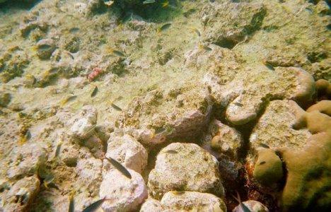 Koralblegning af Great Barrier Reef.